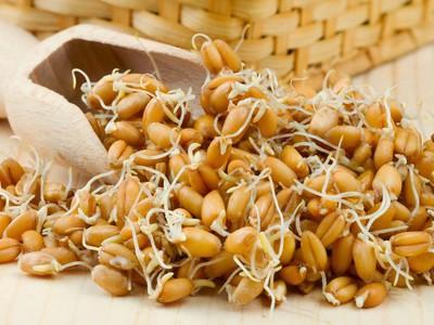 Пророщенная пшеница для похудения