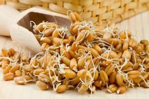 Как соблюдается диета на проросщеной пшенице